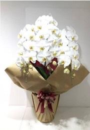 胡蝶蘭・観葉植物等のレンタル商品画像